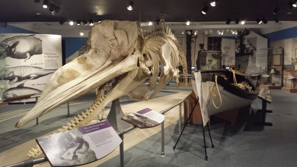 new-bedford-whaling-museum-sprem-whale